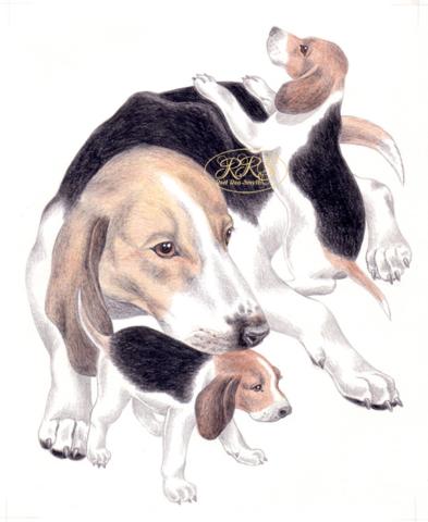"L. Tungal ""Koer tunneb koera"" illustratsioon"