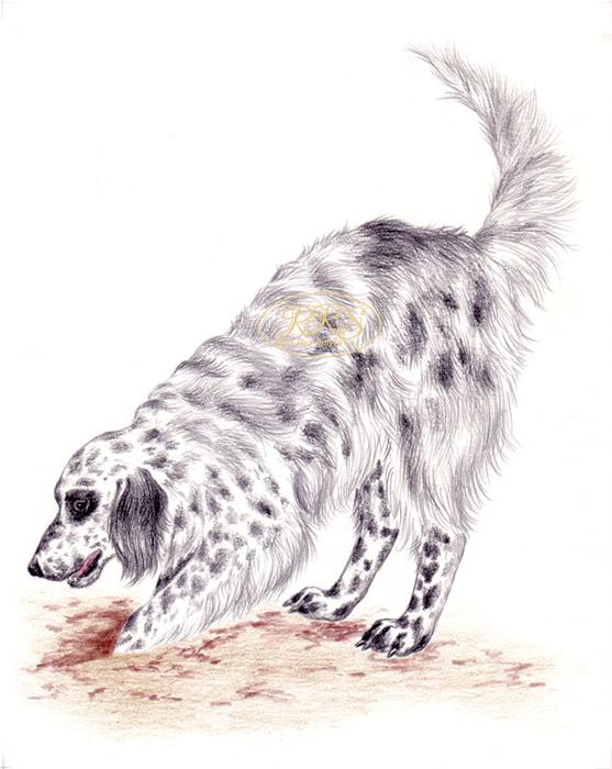 L. Tungal 'Dog Knows Dog' illustration