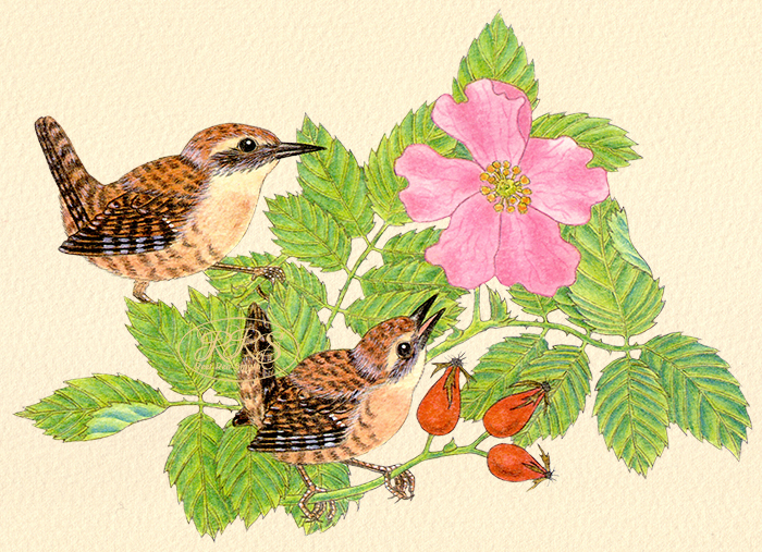 Card with wrens