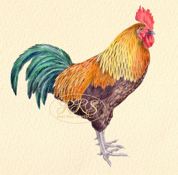 Multicolored cockerel