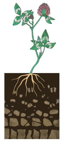 Soil affecting factors