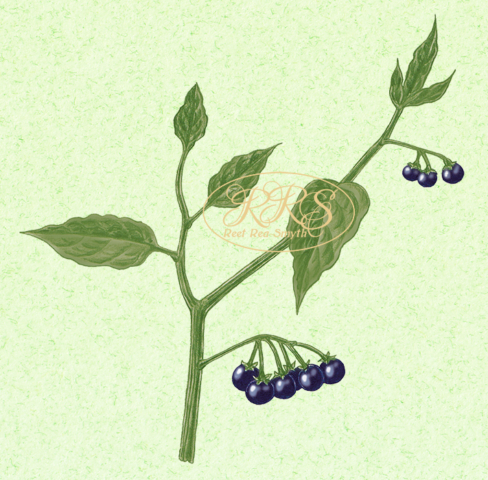 European black nightshade