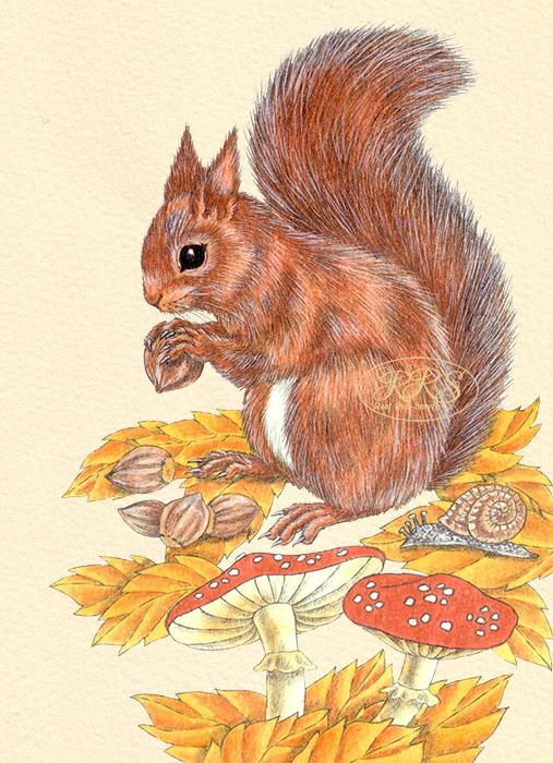 Oravakaart