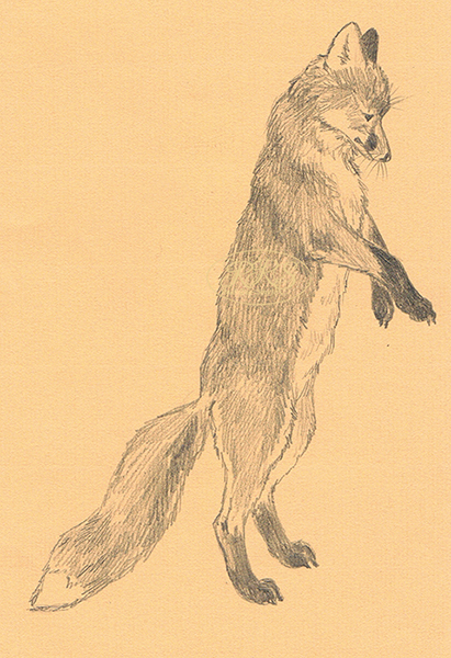 J. Rannap 'Twisted Paw' illustration