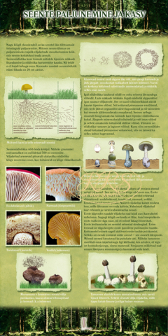 Seente paljunemine ja kasv
