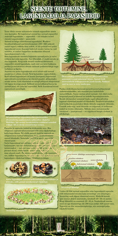 Seente toitumine. Lagundajad ja parasiidid