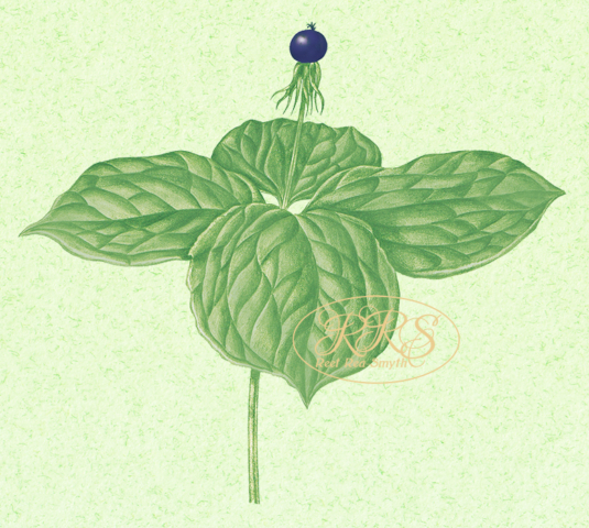 Herb-paris