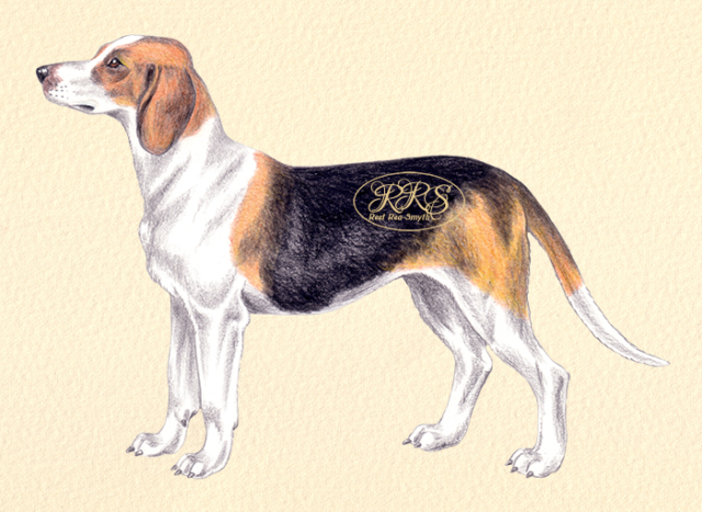 Estonian Hound