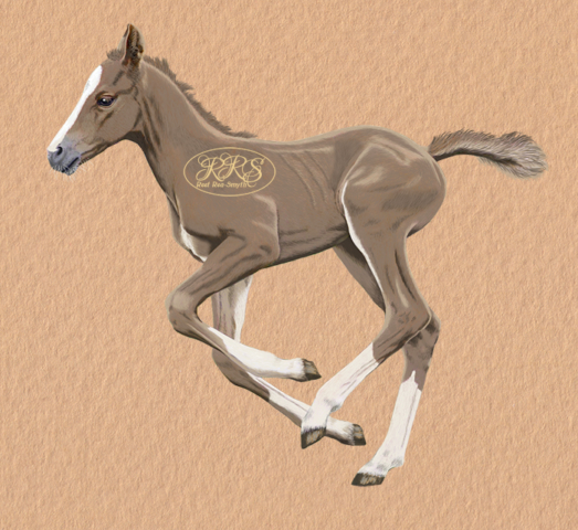Foal Hestia