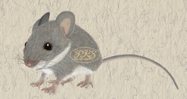 Mouse Joosu
