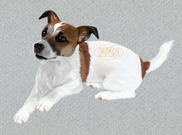 Jack Russell Terrier Steffi