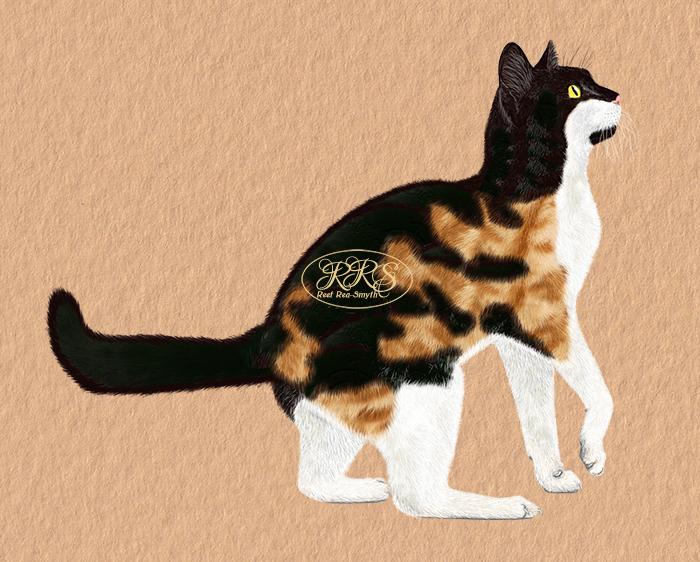 Tricolour cat