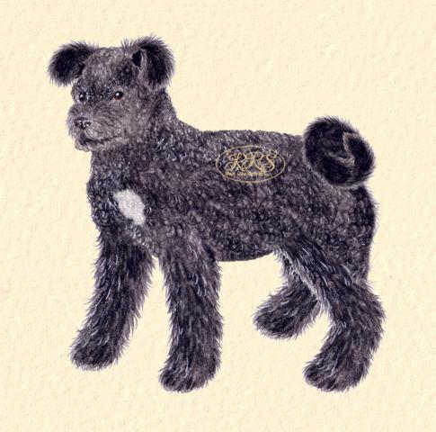 Black mixed-breed dog