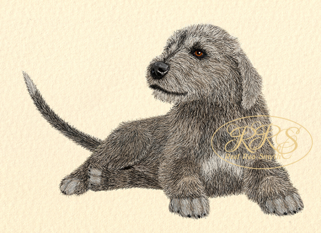 Lying Irish Wolfhound puppy