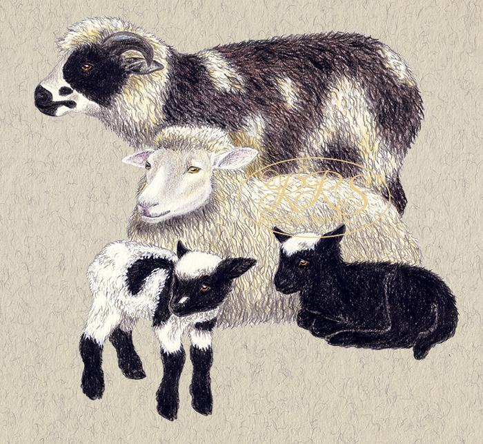 Kihnu native sheep family