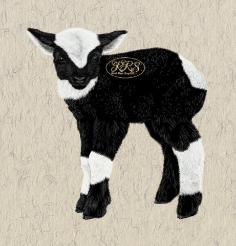 Kihnu native lamb
